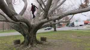 Eriksen-tree